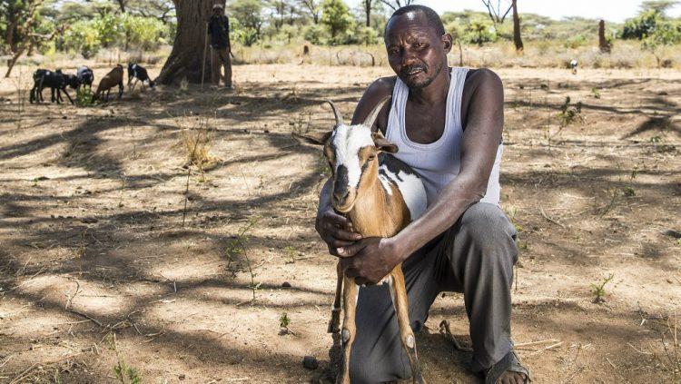 Kenialainen Paul Cheliwo laiduntaa vuohiaan akaasiapuun alla.